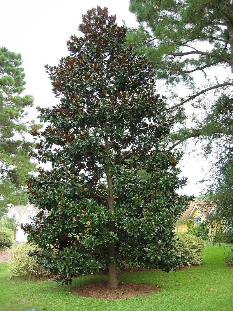 Southern Magnolia Augusta Ga Official Website